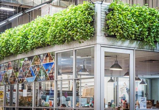 dirrt-office-plants.jpg